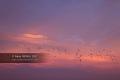 Sunrise-Anglet-28
