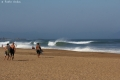 vague anglet (2)